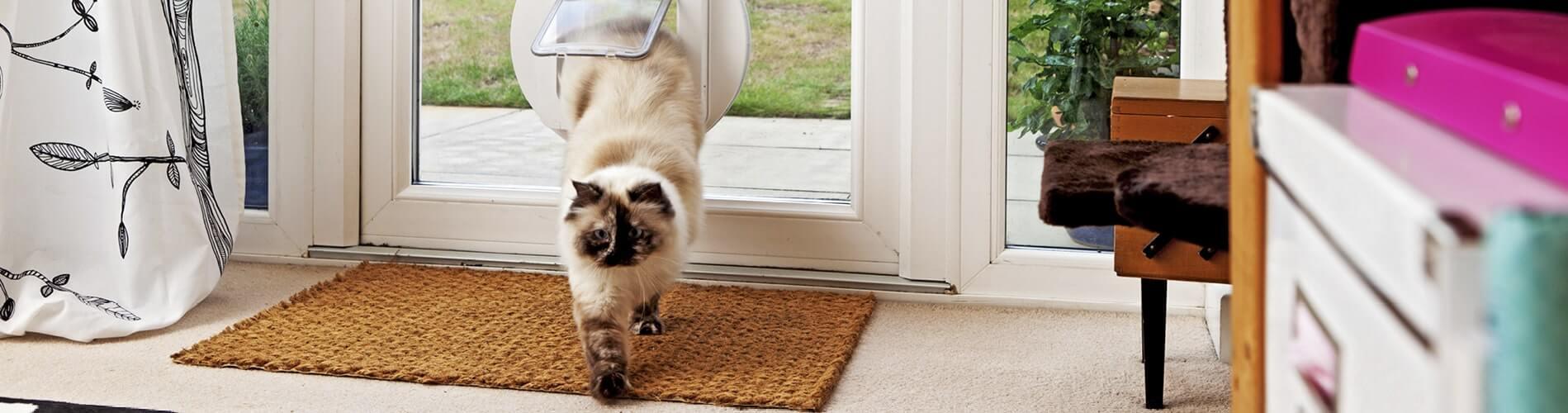 Cat door training