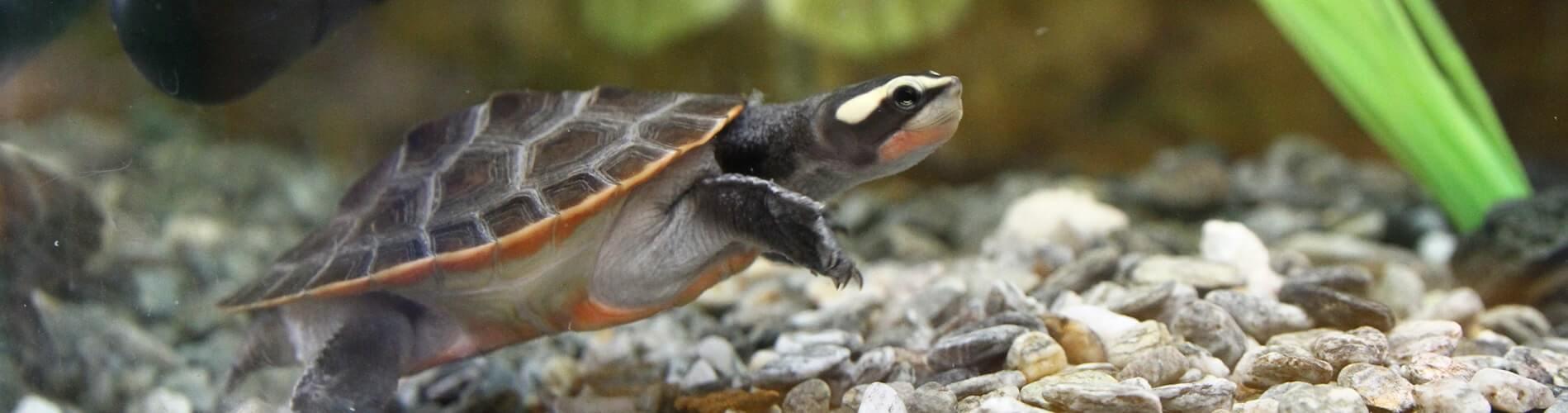 Turtle care guide