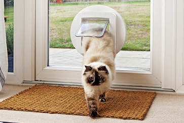 Cat door training