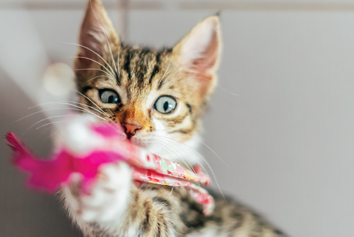 Boredom busters for cats: Toys and scratchers