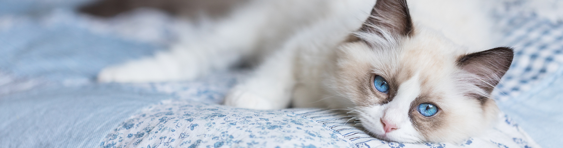 The benefits of breed-specific cat food