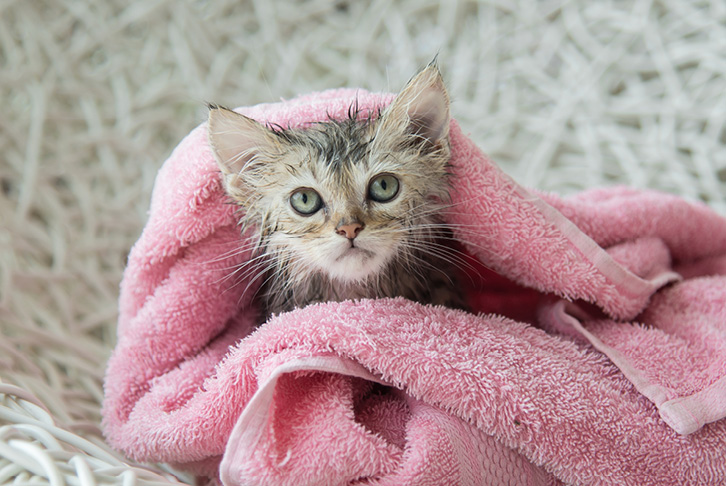 How to bathe and clean your cat at home