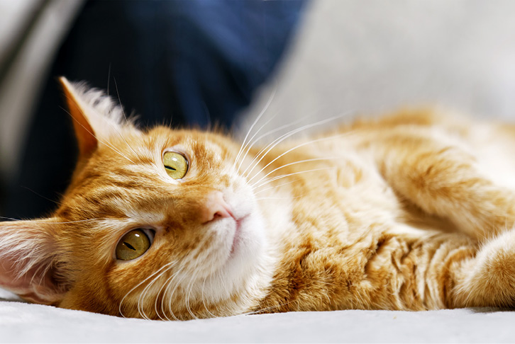 Cat health checklist - 10 tips to keep your cat healthy