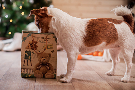 Holiday Dog Gift Guide
