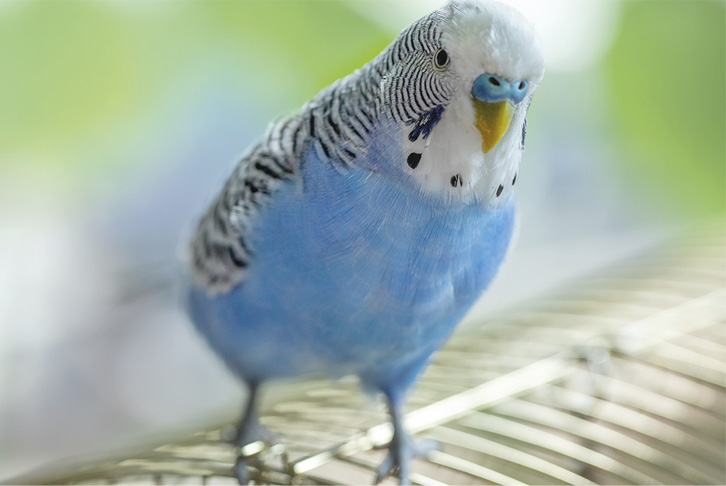 Creating a safe and happy environment for your bird
