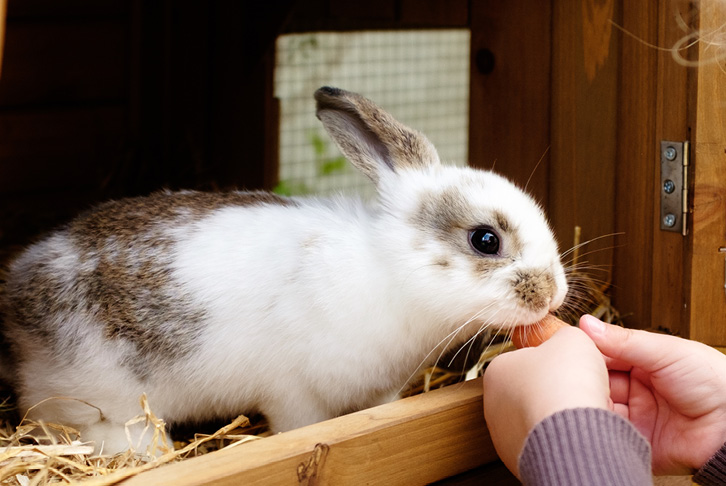 Dental care for rabbits and guinea pigs