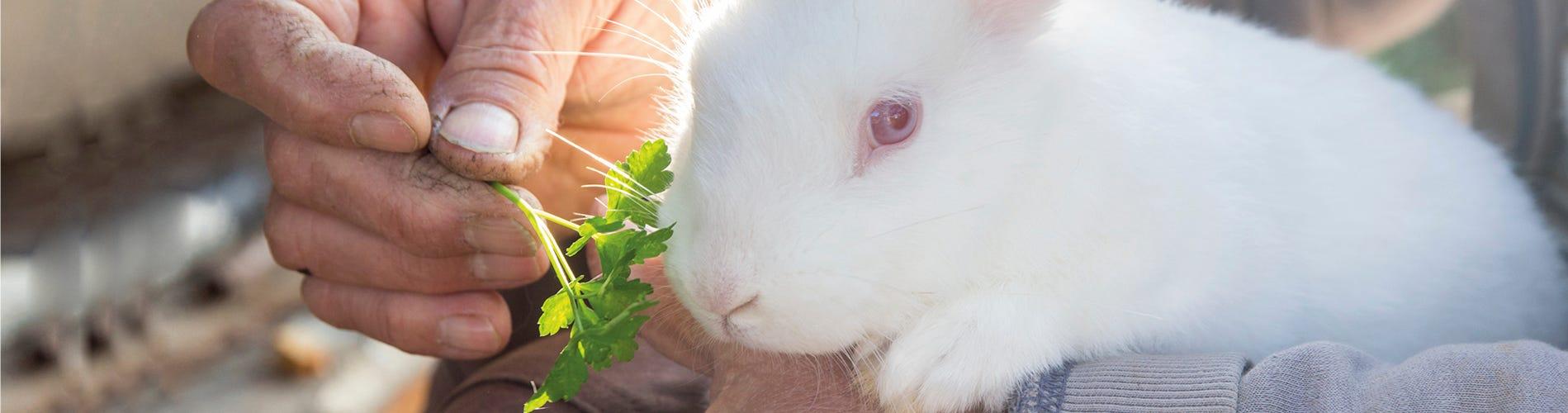 Tips & tricks for feeding your rabbit