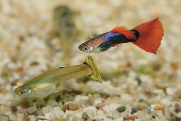 Common Fish Diseases