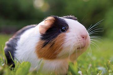 Rat & Mouse Nutrition