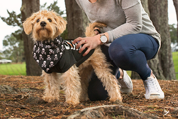 Reducing your dog's anxiety on Halloween