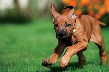 Puppy playtime, socialisation and safe car travel