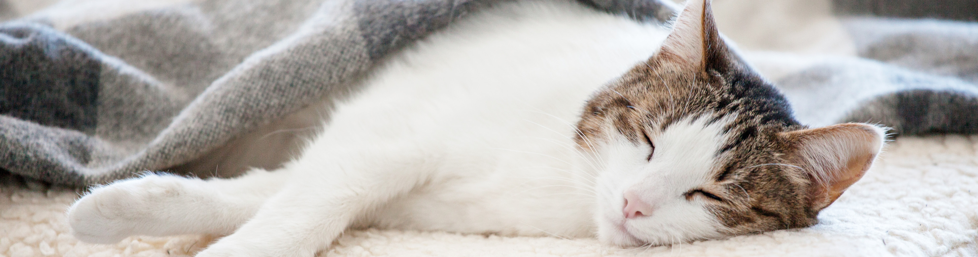 How can I tell if my pet is feeling the cold?