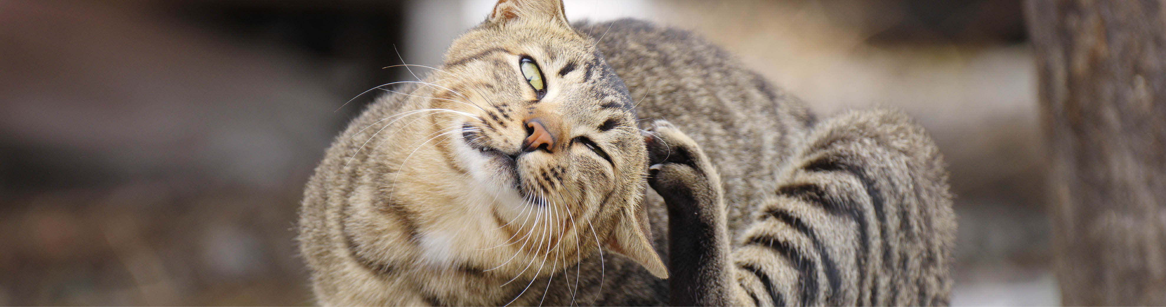 How to choose the right parasite protection for your cat