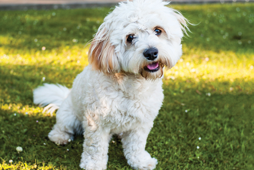 How to groom different dog coat types