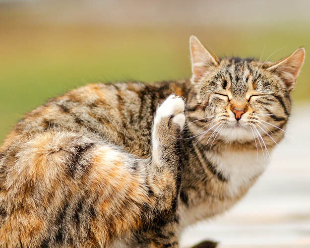 How to spot the signs of fleas