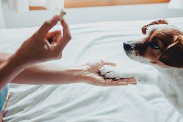 How to teach your dog to do tricks