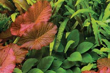 Aquarium Plants Care Guide