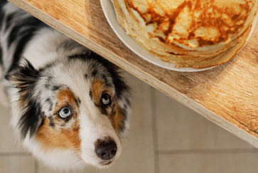 Toxic foods for cats & dogs