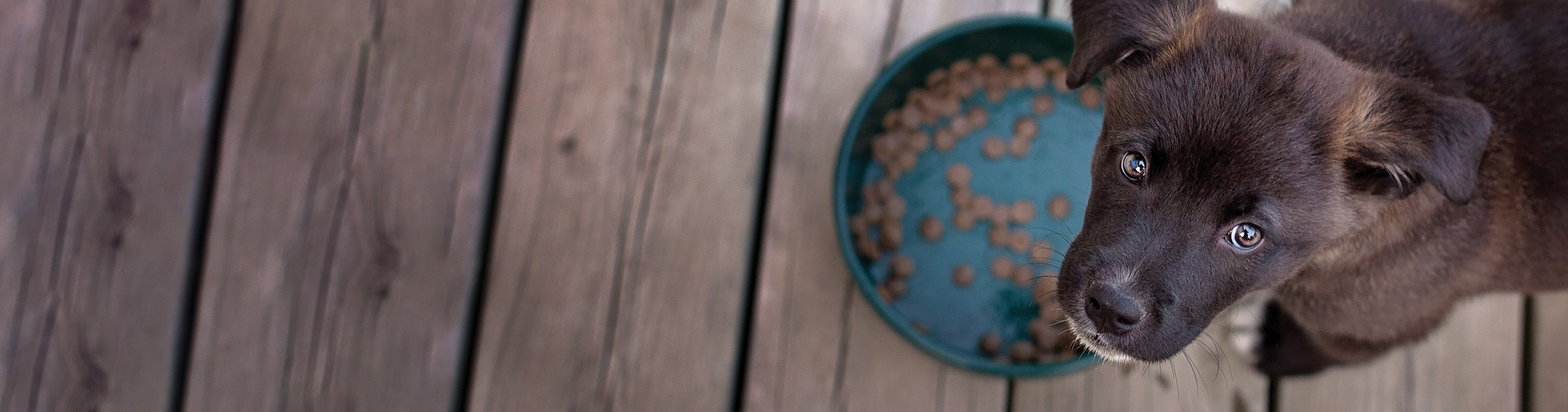 Why you should choose Superior Nutrition dog food