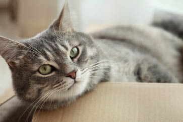 Help your cat reach their perfect weight