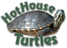 Hot House Turtles