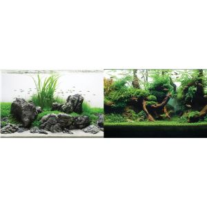 I240967-Seaview Background Greenspike/amazonia 30x60cm