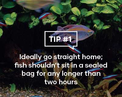 Ideally go straight home; fish shouldn't sit in a sealed bag for any longer than two hours