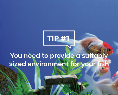 You need to provide a suitably sized environment for your fish