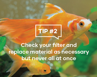 Check your filter and replace material as necessary but never all at once