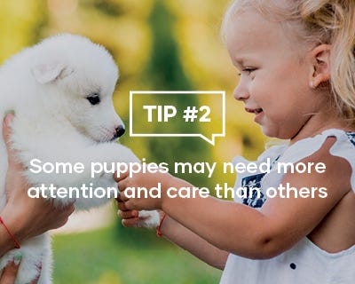 Some puppies may need more attention and care than others