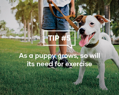 As a puppy grows, so will it's need for exercise