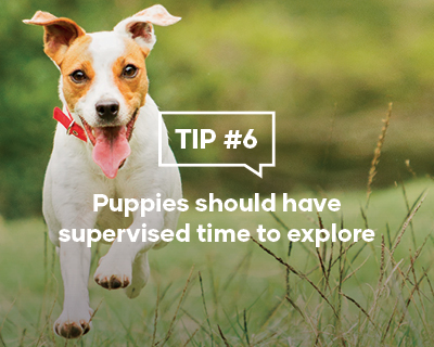 Puppies should have supervised time to explore