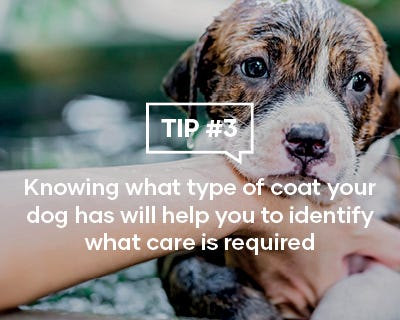 Knowing what type of coat your dog has will help you to identify what care is required