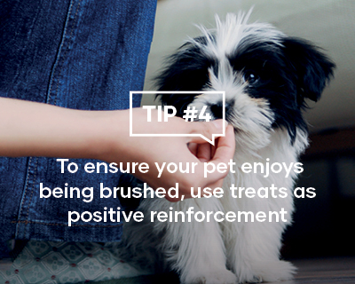 To ensure your pet enjoys being brushed, use treats as positive reinforcement