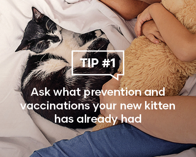 Ask what prevention and vaccinations your new kitten has already had