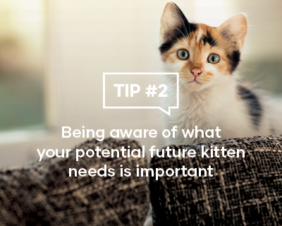 Being aware of what your potential future kitten needs is important