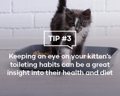 Keeping an eye on your kitten's toileting habits can be a great insight into their health and diet