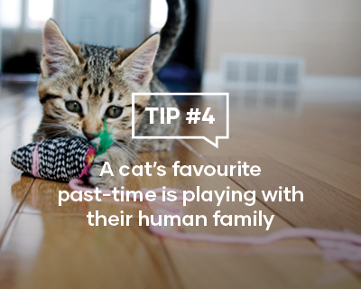 A cat's favourite past-time is playing with their human family