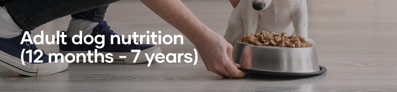Image Banner: Adult dog nutrition for 12 months to 7 years old.
