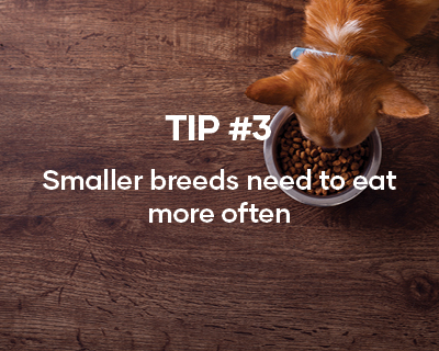 We suggest feeding your puppy a Superior Nutrition Diet