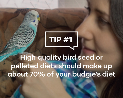 High quality bird seed or pelleted diets should make up about 70% of your budgie's diet