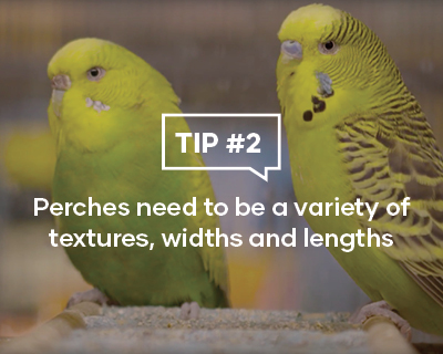 Perches need to be a variety of textures, widths and lengths