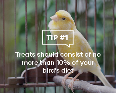 Treats should consist of no more than 10% of your birds diet