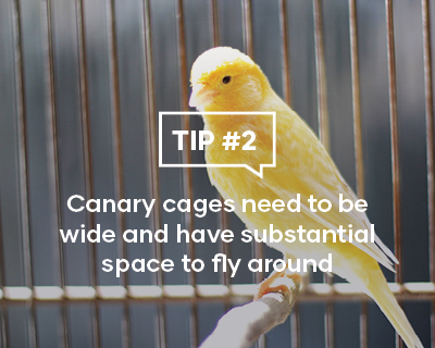 Canary cages need to be wide and have substantial space to fly around