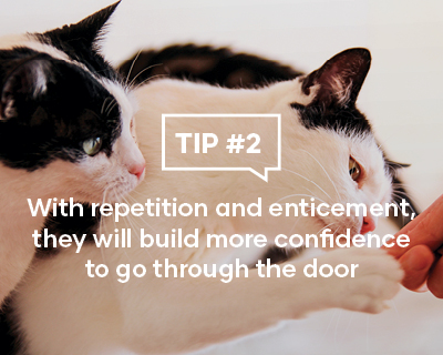 With repetition and enticement, they will build more confidence to go through the door