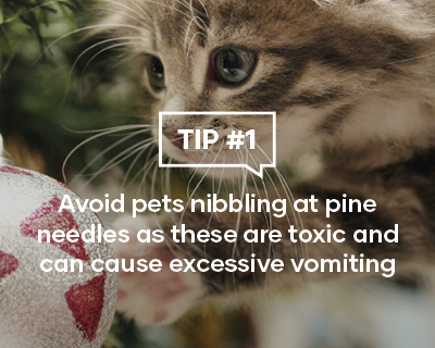 Avoid pets nibbling at pine needles as these are toxic and can cause excessive vomiting