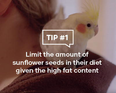 Limit the amount of sunflower seeds in their diet given the high fat content
