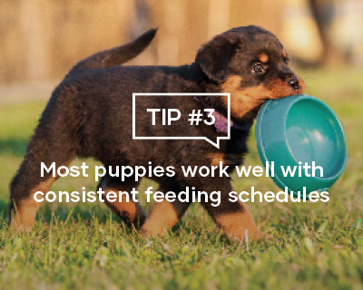 Most puppies work well with consistent feeding schedules