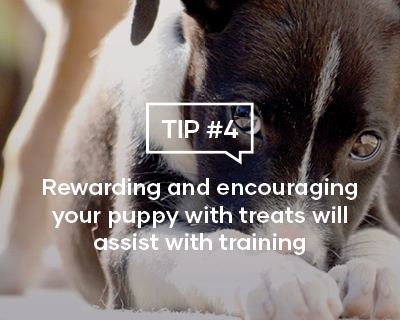 Rewarding and encouraging your puppy with treats will assist with training
