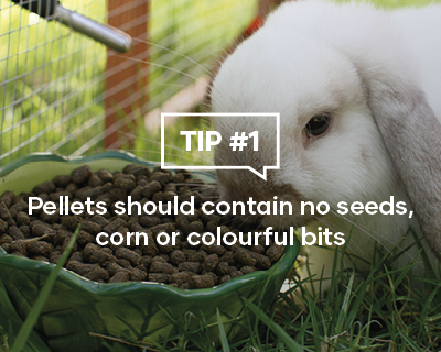 Pellets should contain no seeds, corn or colourful bits